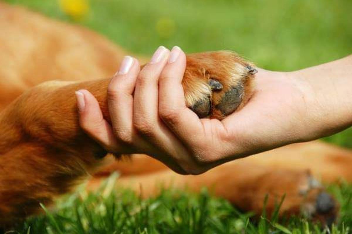 CastrAÇÃO: quanto mais animais adultos castrados, menos filhotes abandonados!!