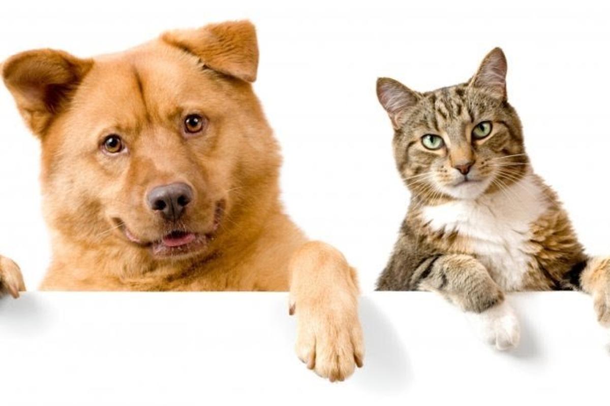 Campanha dos Pets