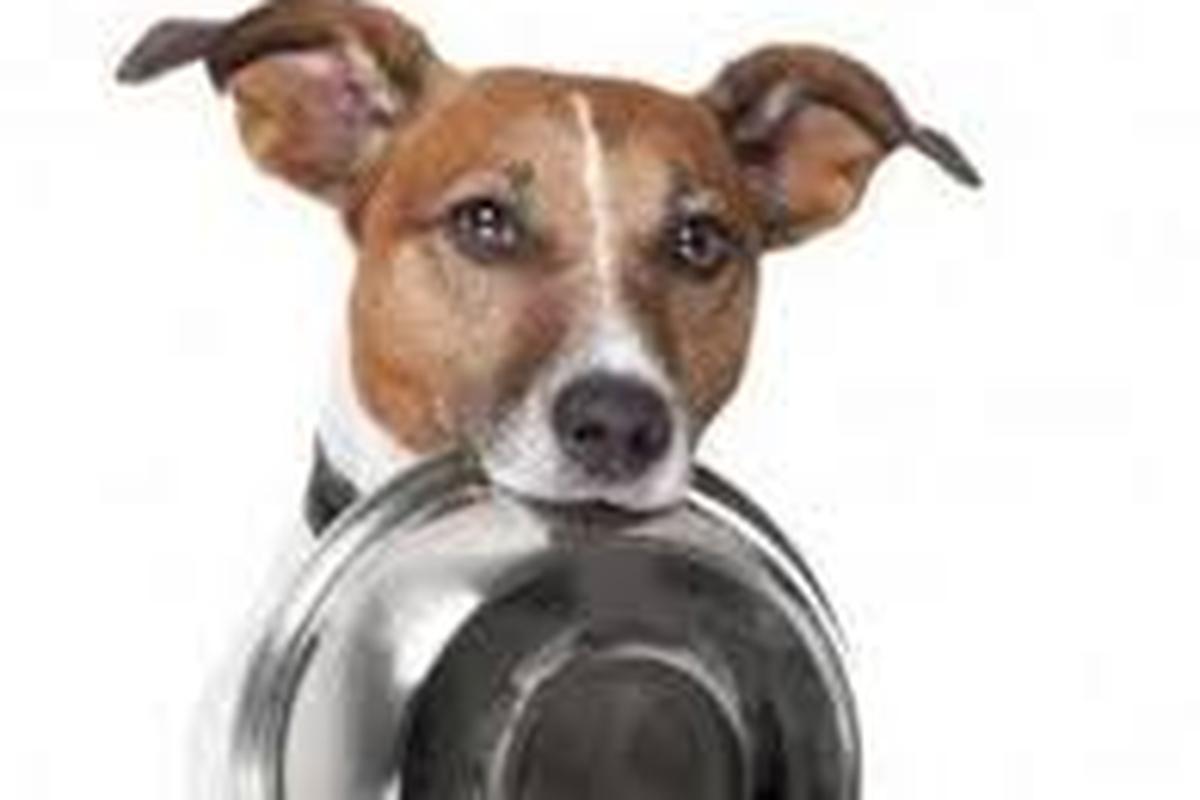 Doação de ração para os animais abandonados no aeroporto CWB