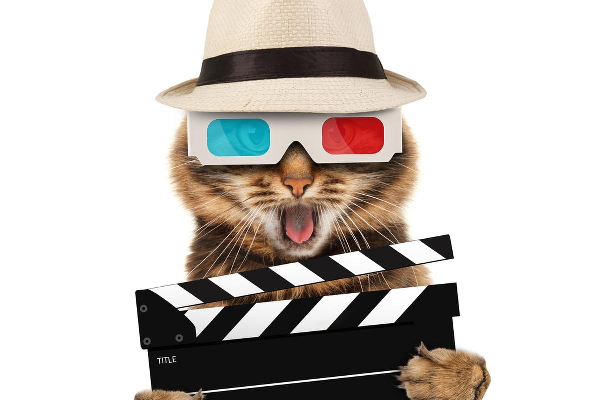 Videomaker Profissa