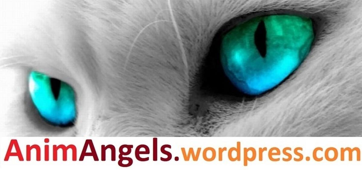 Divulgação virtual de um website sobre a proteção animal no Século XXII