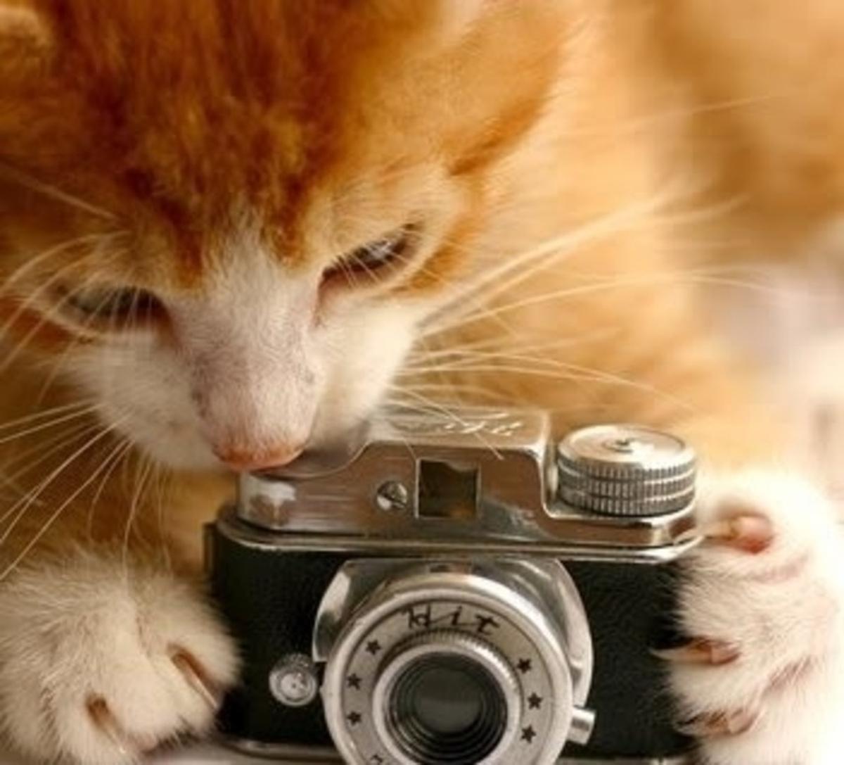 Fotógrafo de animais para adoção