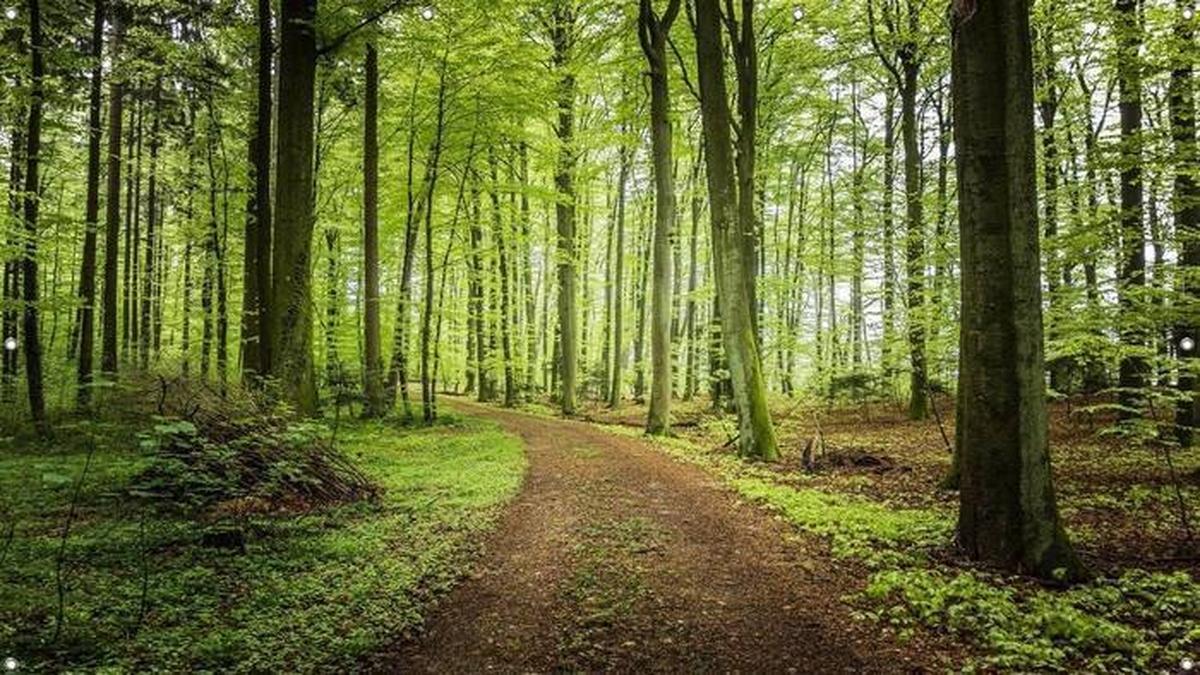 Floresta Azul CGB