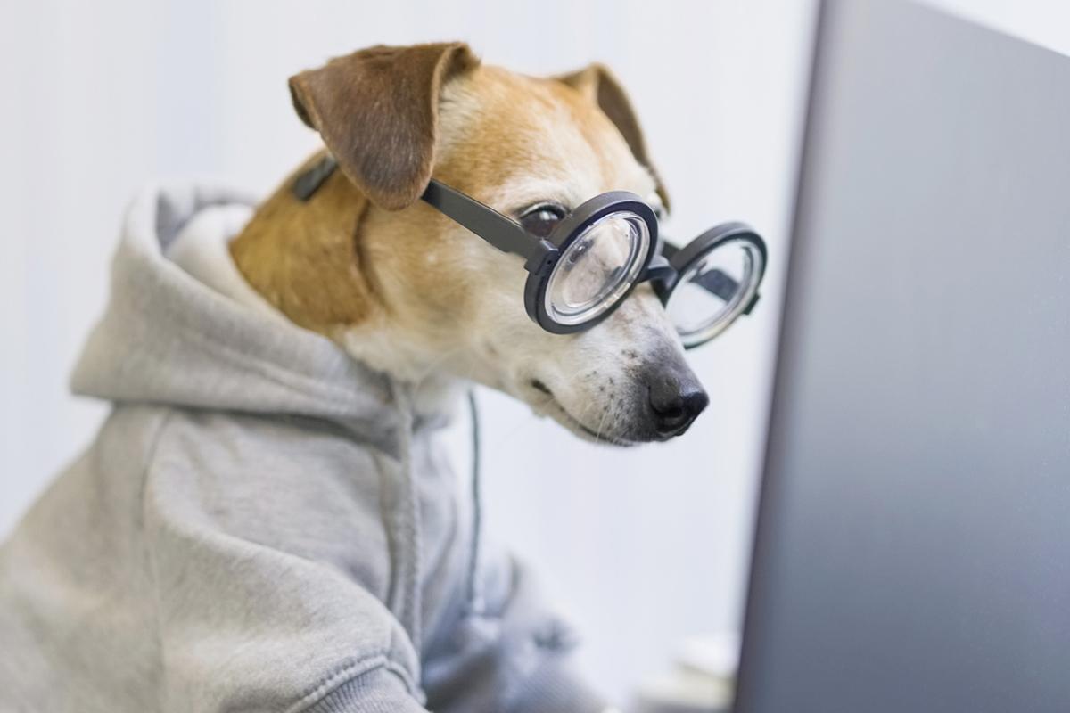 Desenvolvedor wordpress