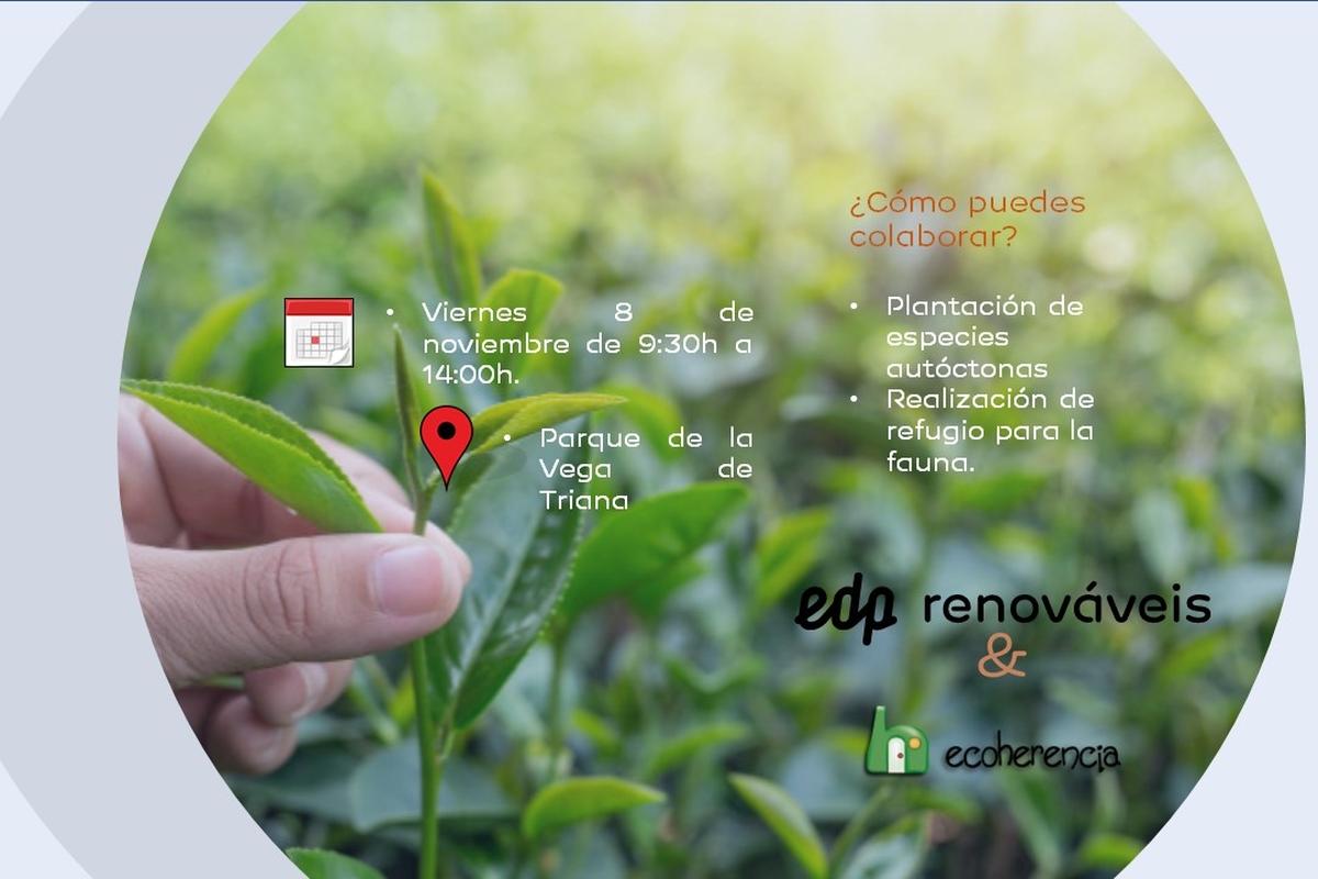 Voluntariado Medioambiental Sevilla